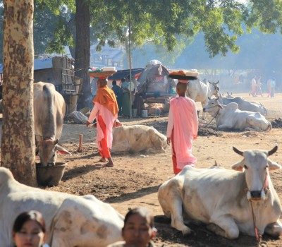 A traditional ox and cart will bring you to your lunch spot, where you can enjoy a picnic amongst the hills, with some of the locals