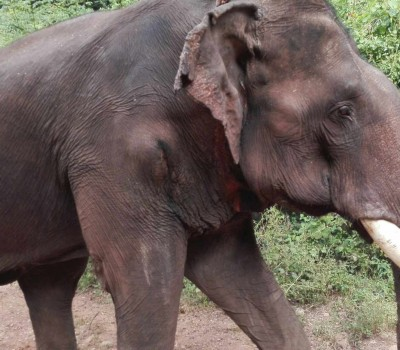 Bathe and feed these retired elephants while afterwards planting a tree to contribute towards the reforestation efforts